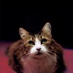 KiTT_Y_Cat_by_Spyxxx